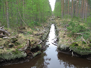 Forestry on peatland Finland300x200